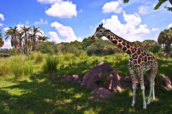 Wall Art - Photograph - Long Neck by Ryan Crane