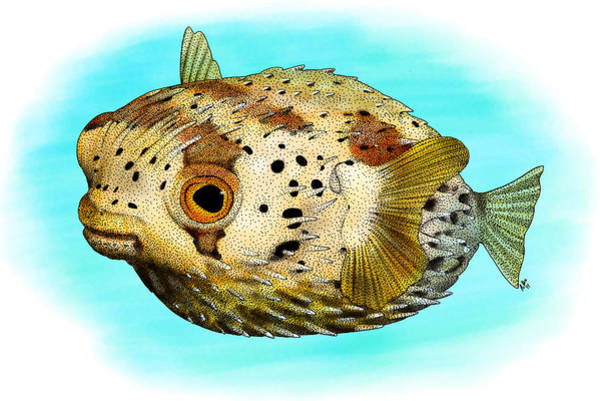 Balloonfish Photograph - Long-spine Porcupine Fish by Roger Hall