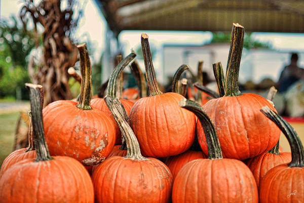 Photograph - Long Stem Pumpkins by Paulette B Wright