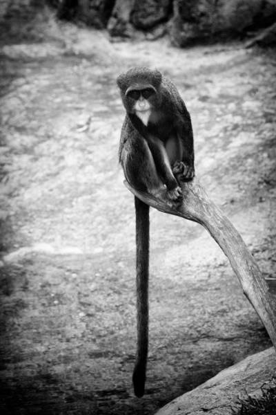 Photograph - Long Tail by Goyo Ambrosio