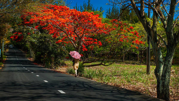 Photograph - Long Way Along The Road. Mauritius by Jenny Rainbow