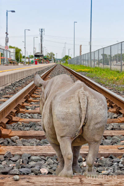 Photograph - Rhino On A Railway Track by Les Palenik