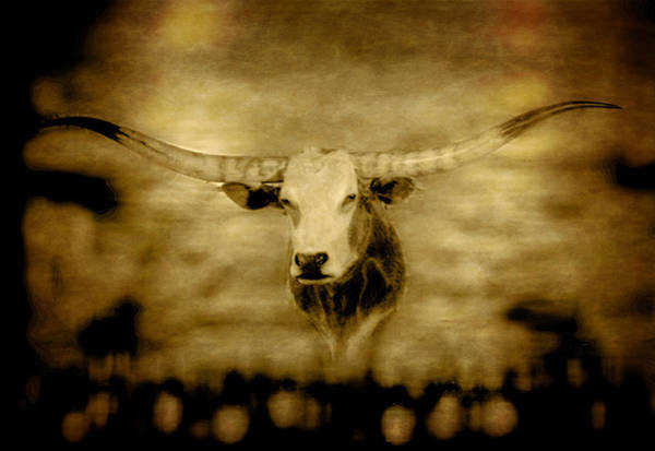 Photograph - Longhorn Bull by David Yocum