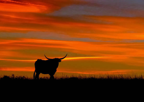 Wall Art - Photograph - Longhorn Sunset by Dawn Key