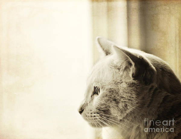 Photograph - Longing by Pam  Holdsworth