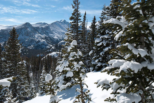 Photograph - Long's Peak And Snow-covered Trees by Cascade Colors