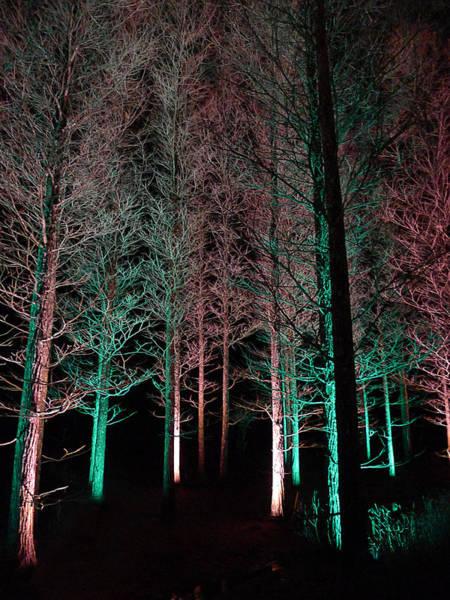 Photograph - Longwood Gardens - Tree Walk At Night by Richard Reeve