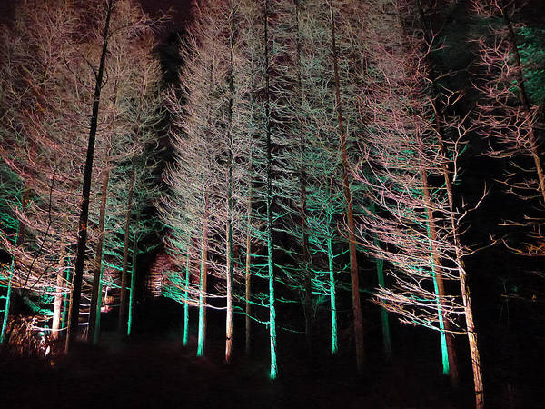 Photograph - Longwood Gardens - Tree Stand At Night by Richard Reeve