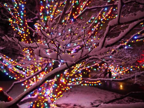 Photograph - Longwood Lights 2 by Richard Reeve