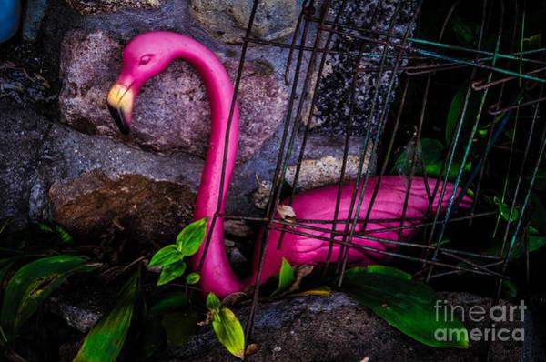 Photograph - Lonley Flamingo by Michael Arend