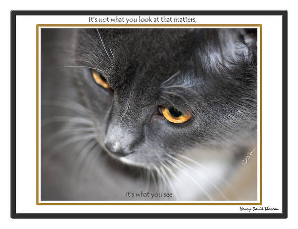 Photograph - Look And See by Carol Erikson