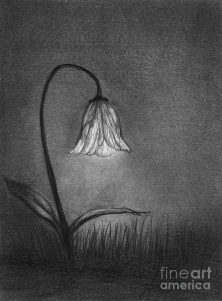 Night Time Drawing - Look For Your Life by J Ferwerda