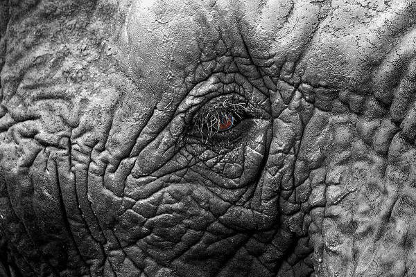 Wall Art - Photograph - Look Into My Eye by Chris Whittle
