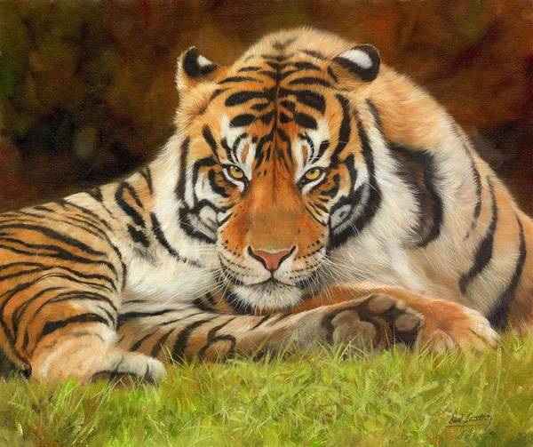 Big Cat Wall Art - Painting - Look Into My Eyes by David Stribbling