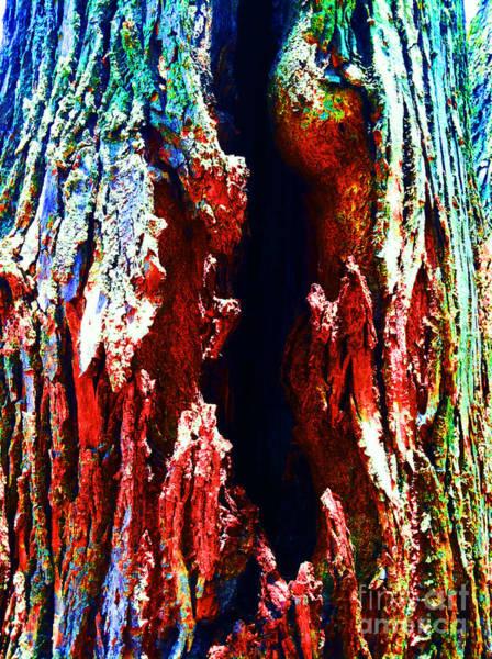 Photograph - Looking Beyond Rainbow by Jamie Lynn