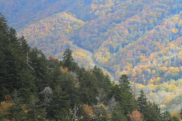 Photograph - Looking Down On Autumn From The Top Of Smoky Mountains by Dan Sproul