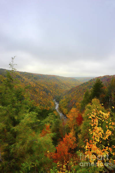 Photograph - Looking Downstream At Blackwater River Gorge In Fall by Dan Friend