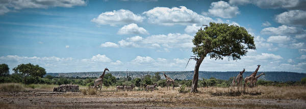 Wall Art - Photograph - Looking For Shade by Jason Lanier