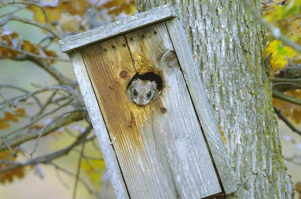 Critters Photograph - Looking Outside The Box by Jeff Swan