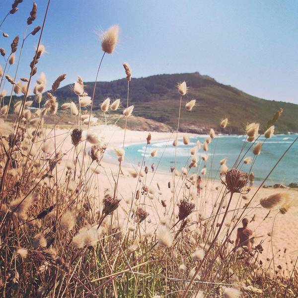 Galicia Photograph - Looking Through Dry Grass Towards by Jodie Griggs
