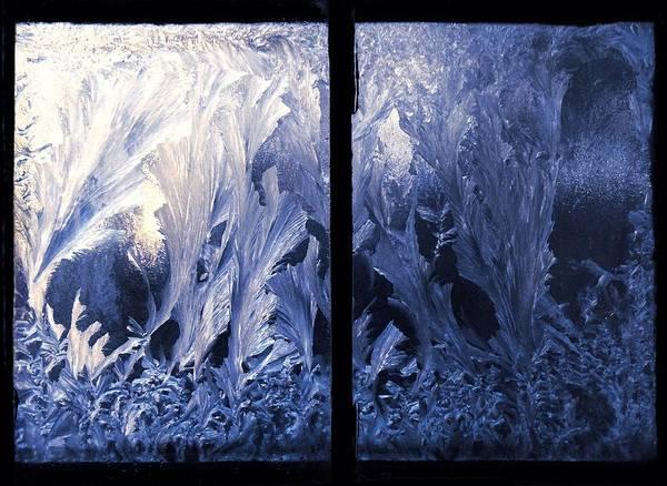 Fern Frost Photograph - Looking Through by Joy Nichols