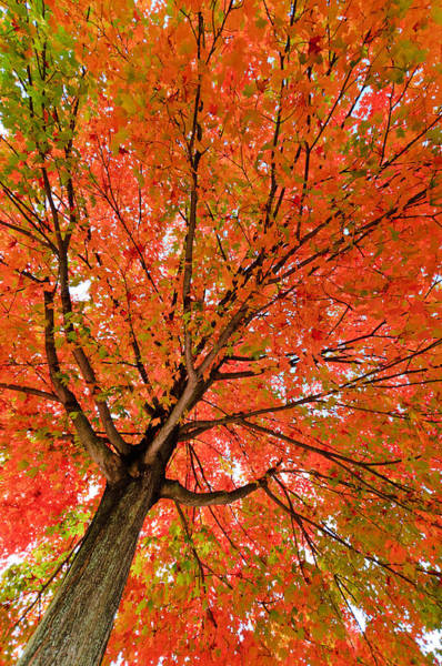 Photograph - Looking Up In Autumn by Gary Slawsky