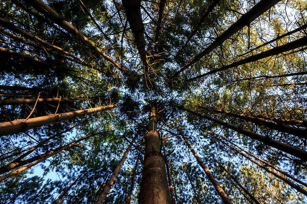 Photograph - Looking Up by Keith Allen