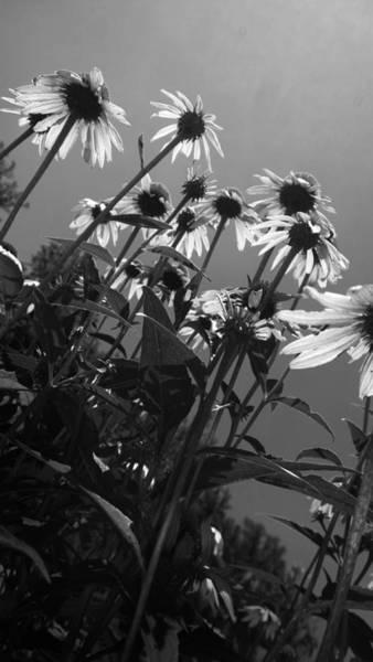 Photograph - Looking Upward by Kelly Hazel