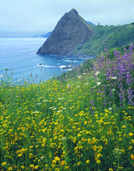 Photograph - 1a5480-lookout Rock Wildflowers by Ed  Cooper Photography