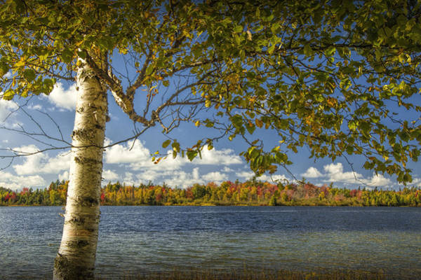 Photograph - Loon Lake In Autumn With White Birch Tree by Randall Nyhof