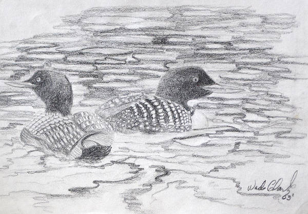 Drawing - Loon Sketch by Wade Clark