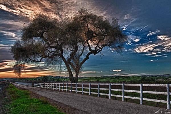 Digital Art - Los Alamos Vineyard Oak by Thomas Hall