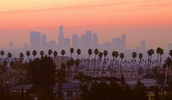 Los Angeles Skyline Photograph - Los Angeles Skyline And Palm Trees by Rene Sheret