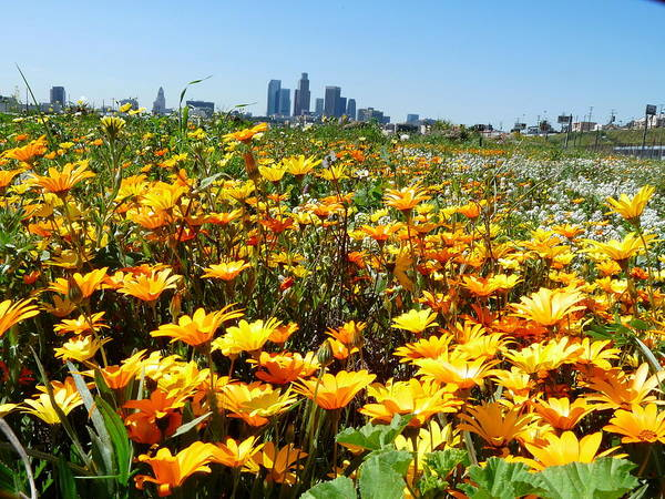 Photograph - Los Angeles Skyline Flowers by Jeff Lowe