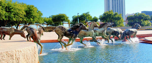 Photograph - Los Colinas Mustangs 14698 by Guy Whiteley