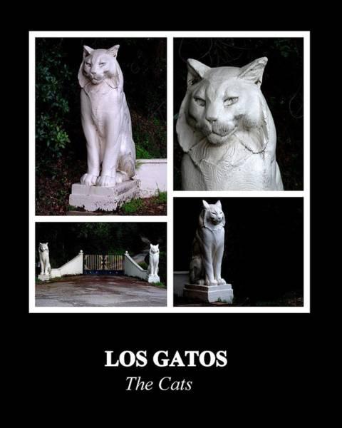 Photograph - Los Gatos by AJ  Schibig