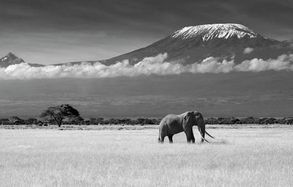 Amboseli Wall Art - Photograph - Lost Colors II by Ibrahim Canakci