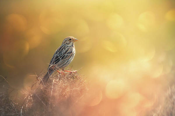 Bunting Photograph - Lost In Bokeh by Sina Pezeshki