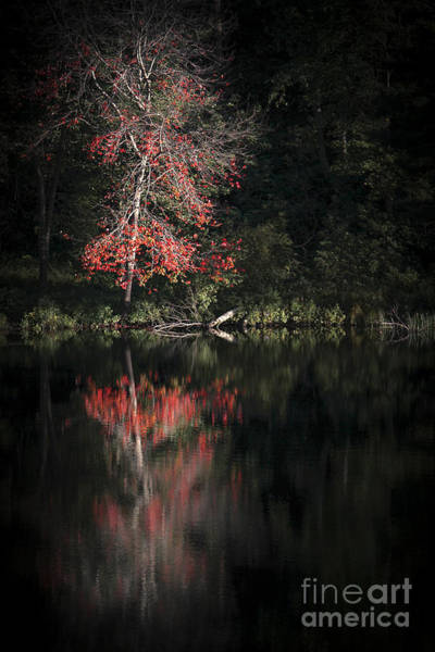 Wall Art - Photograph - Lost In The Autumn Of Eternity by Evelina Kremsdorf