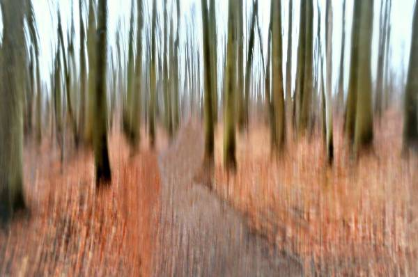 Nature Conservancy Photograph - Into The Woods by Diana Angstadt