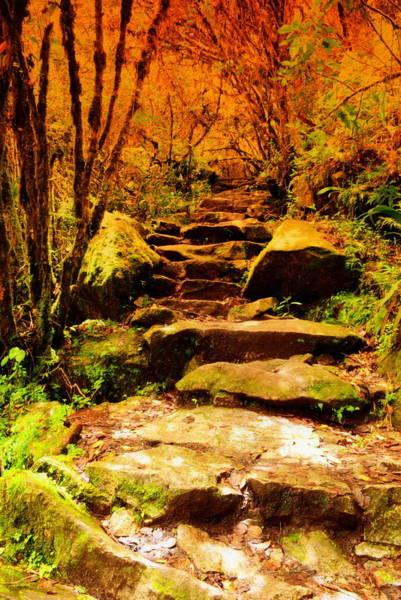 Brillante Photograph - Lost Path by HQ Photo