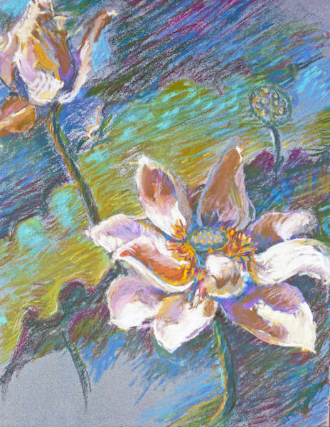 Pastel - Lotus by Ellen Dreibelbis