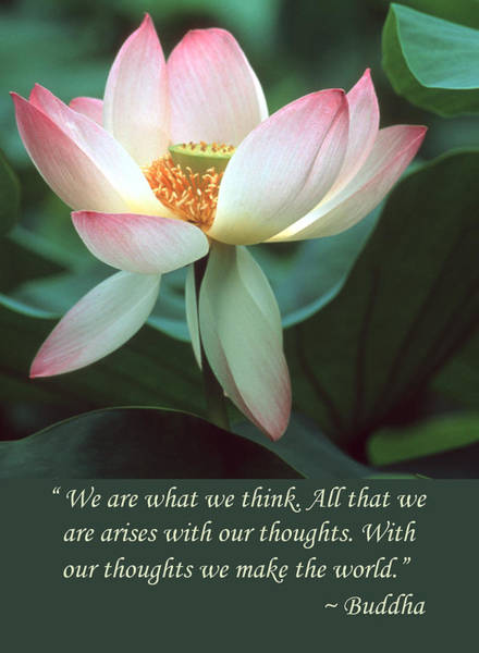 Photograph - Lotus Flower Buddha Quote by Chris Scroggins