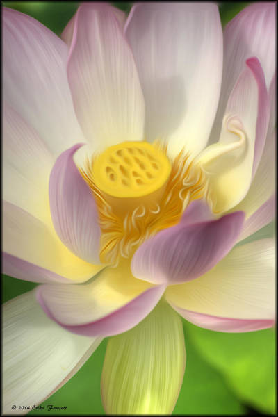 Photograph - Lotus Flower by Erika Fawcett