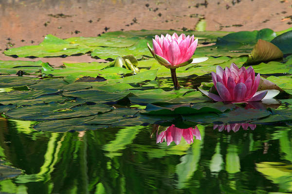 Wall Art - Photograph - Lotus Flower Reflections by Beth Sargent