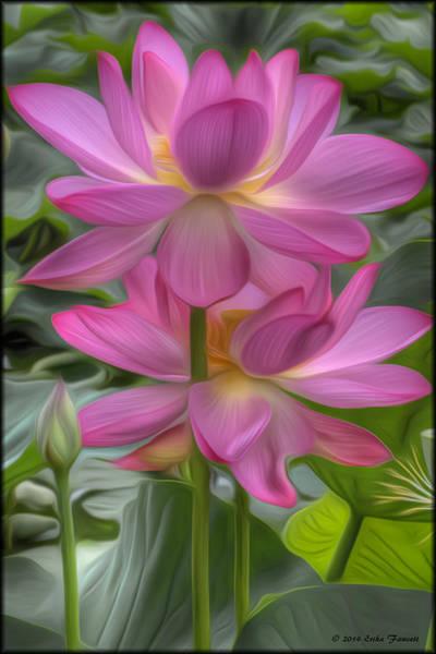 Photograph - Lotus Flowers by Erika Fawcett