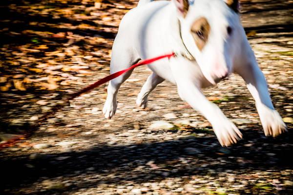Photograph - Louie by Jim DeLillo