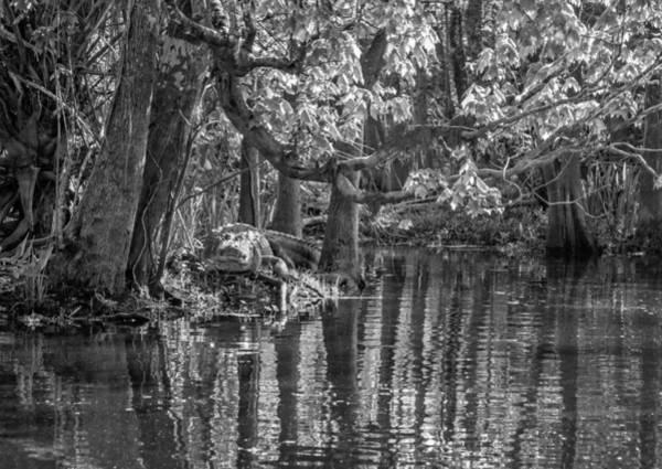 Gator Photograph - Louisiana Bayou - Bw by Steve Harrington