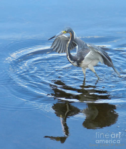 Photograph - Louisiana Heron by Grace Dillon