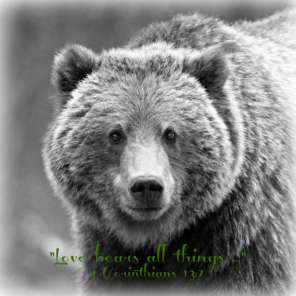 Scripture Photograph - Love Bears All Things ... by Stephen Stookey